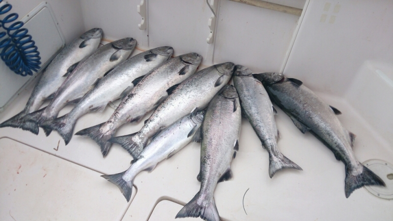 Bunch-Of-Fish-Ucluelet-BC